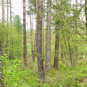 bomen in bos